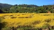 Toeren door de omgeving van Chiang Mai
