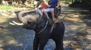 Attracties met dieren in Thailand: laat het links liggen!