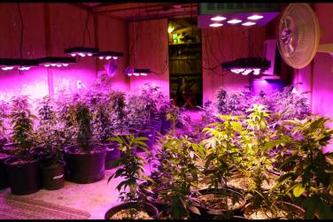 LED Grow Light Review