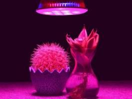 grow light for plants