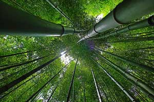 Puffy Bamboo Sheets