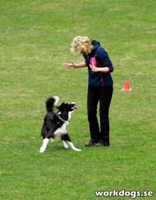Foto: workdogs.se
