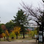 Grounds @ Todaiji Temple, Nara, Japan
