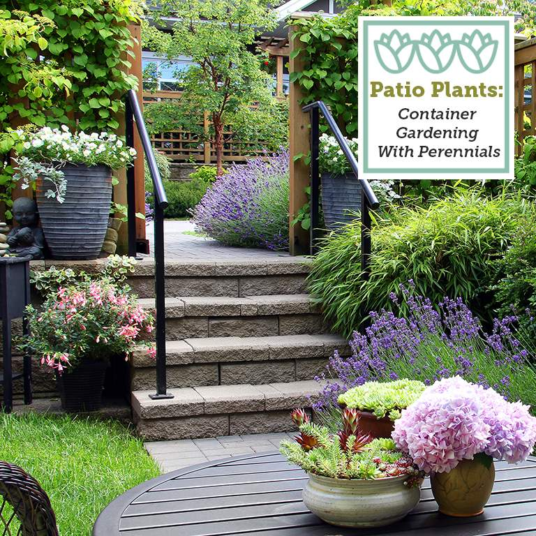 patio plants container gardening with