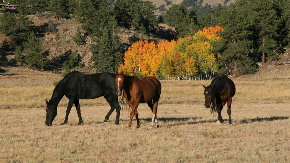 1000px_wide-fall_horses