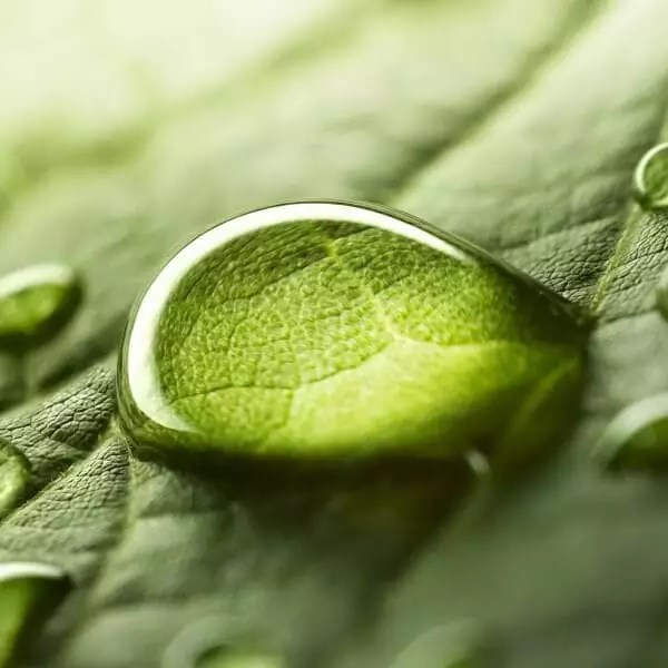 vergroesserter-wassertropfen-auf-gruenem-blatt-highdroxy-wirkstoff-bioflavonoide-antioxidantien