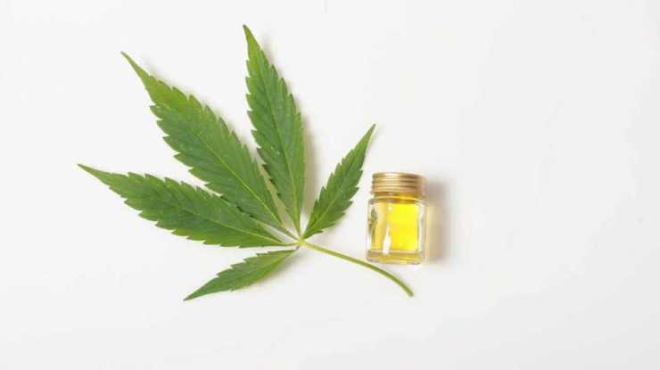 cbd-oil-cannabis