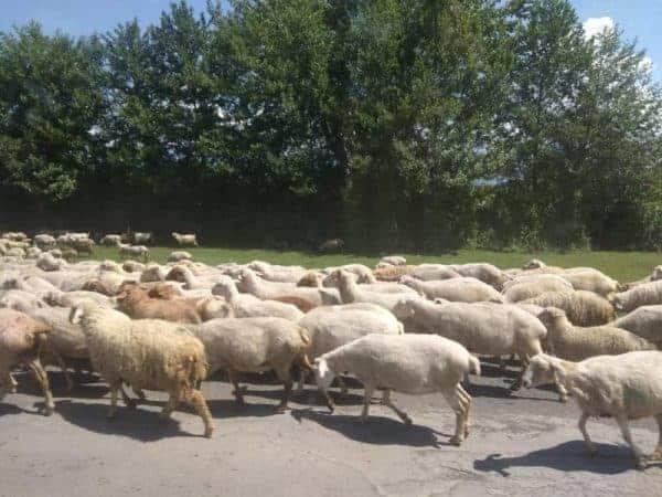 Crossing the border from Azerbaijan to Georgia