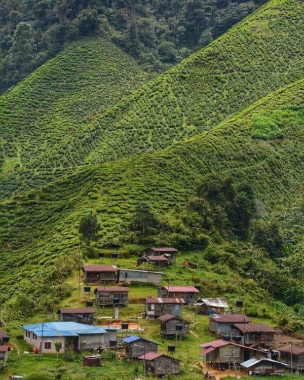 Cameron Highlands houses of Orang Asli people