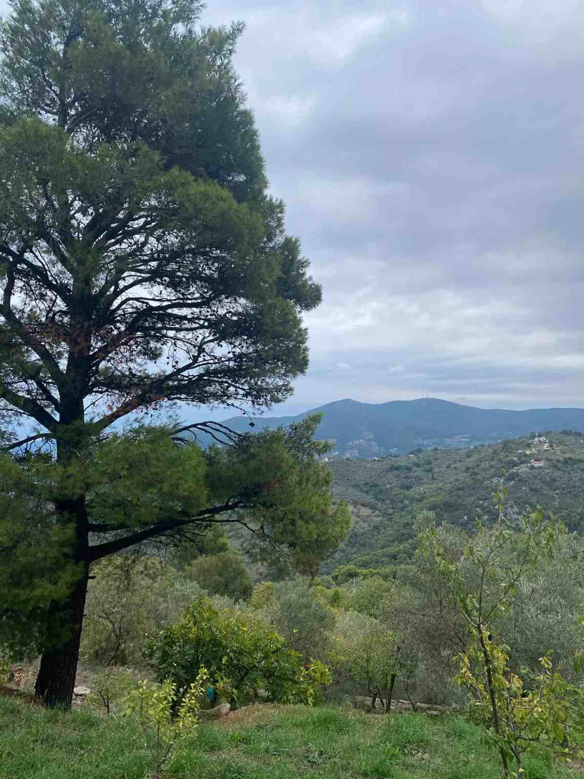 The Best Hikes In Skopelos Your Insider S Guide For 2021