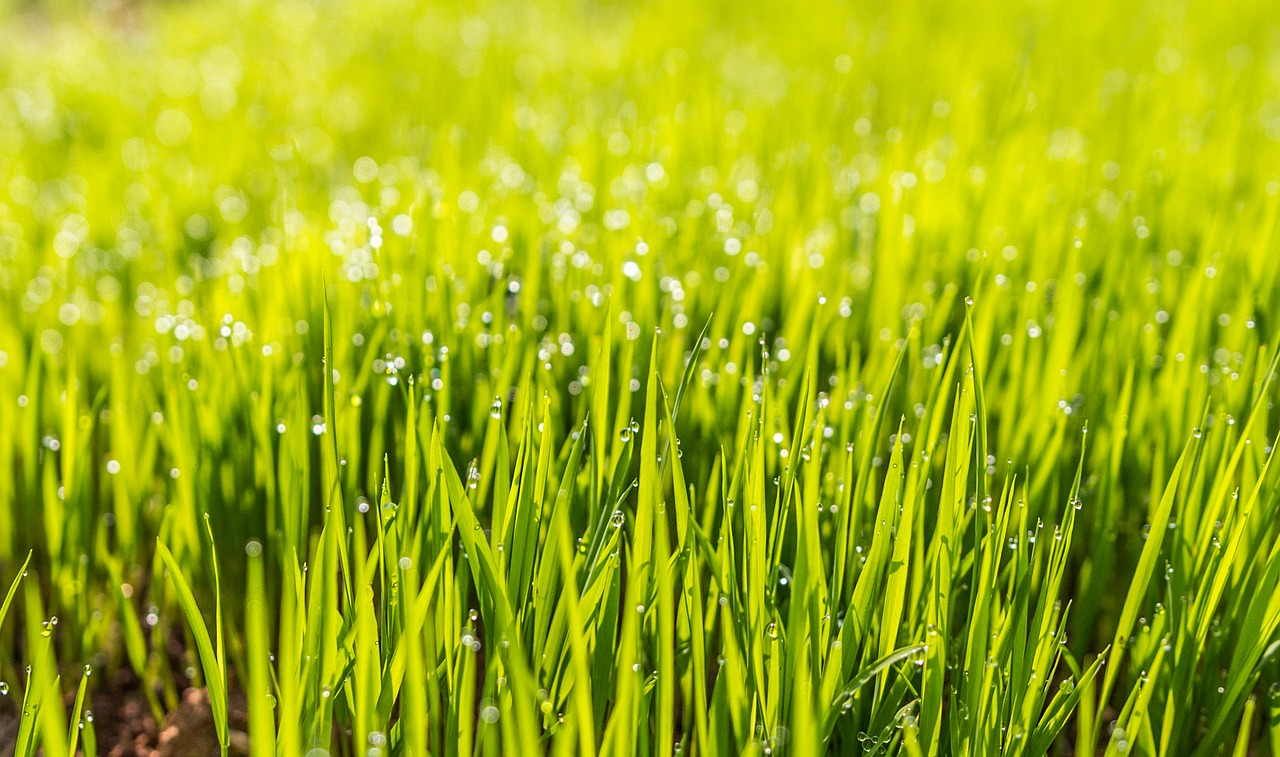 Tagro Helps Build Healthy Lawns
