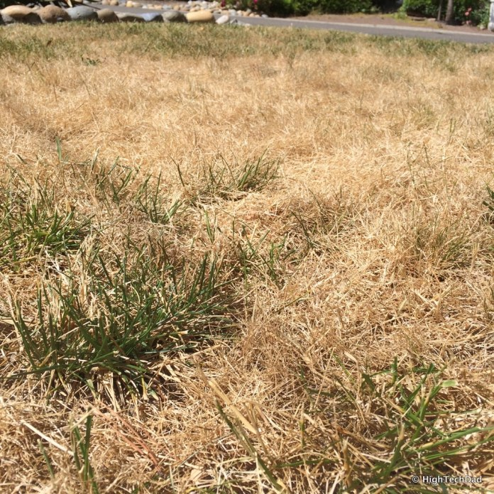 HTD's dead lawn