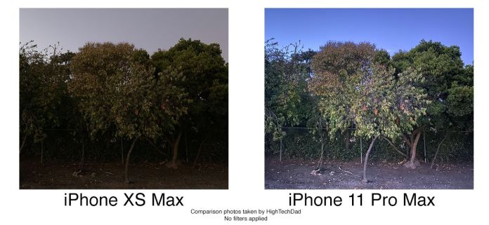 HighTechDad tests iPhone 11 Pro Max - no flash tree photo