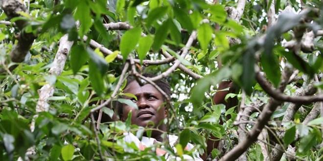 Miraa farmer in Mbeere constituency. FILE PHOTO | NMG