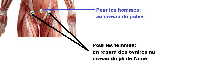 ovaire + pubis