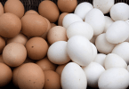 tipos de huevos