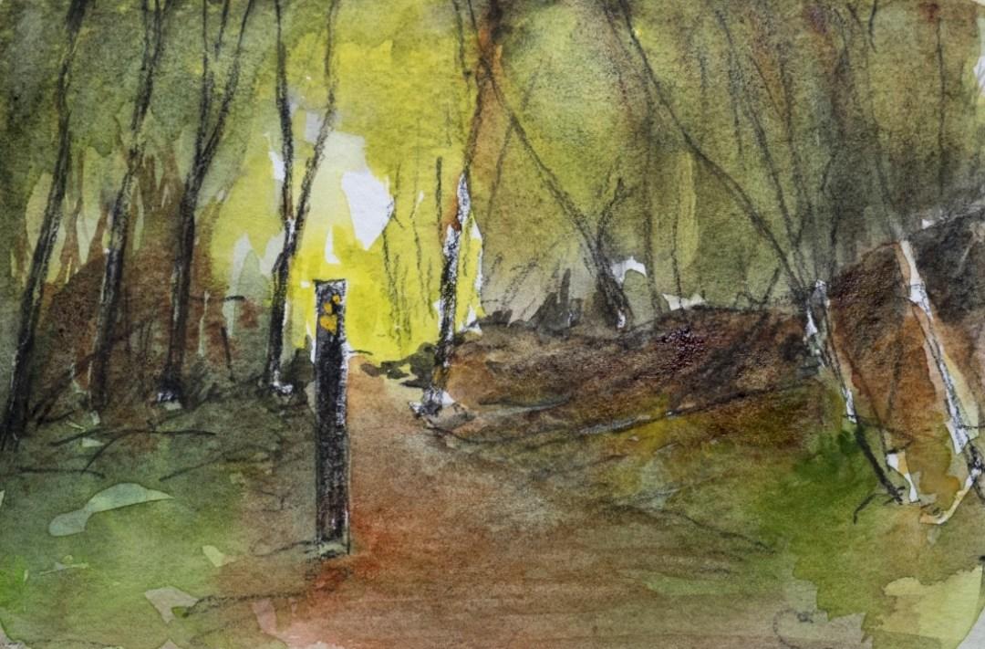 Glengarriff woods