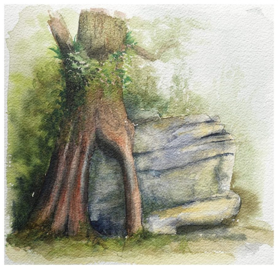 Rata roots on rock. Watercolour sketch