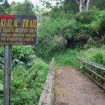 End of Kuilau Trail and start of the Moalepe Trail