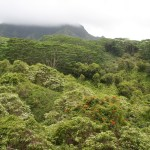 This view is from the Kuilau Trail just beyond the picnic area.