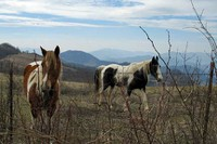 Horses on Canton Watershed hike