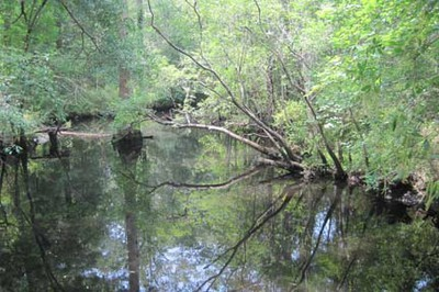 Moores Creek - the creek