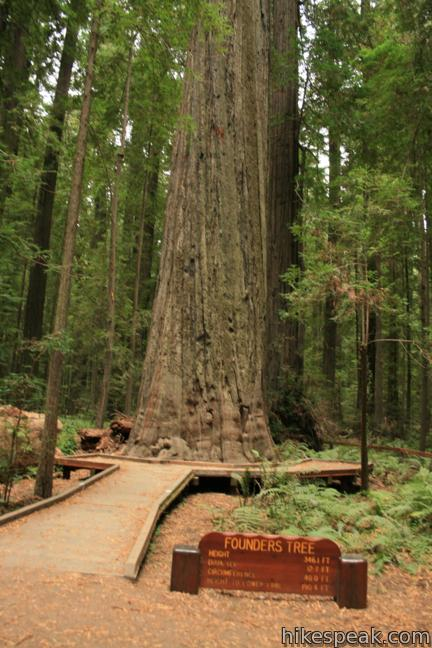 Redwood Forest Location Map