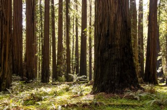 A Weekend in the Redwoods   Hike Then Wine