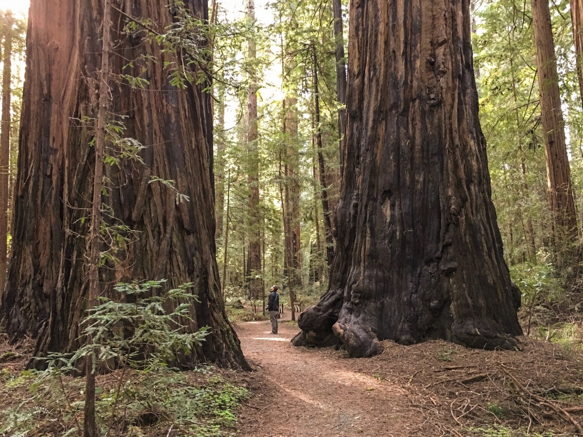 A Weekend in the Redwoods - Humboldt County