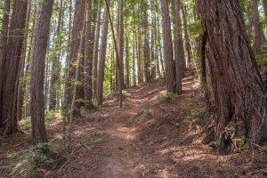 Gary Giacomini Open Space Preserve | Hike then Wine