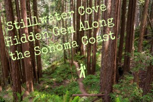 Stillwater Cove, A Hidden Gem Along the Sonoma Coast | Hike Then Wine