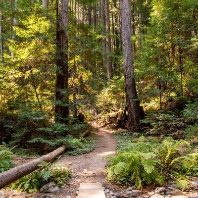 Henry Cowell Fall Creek 1st Attempt – Santa Cruz