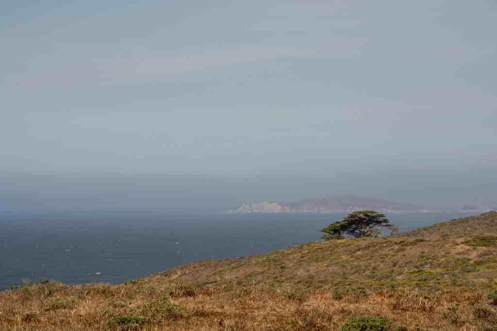 Tule Elk - Tomales Point | Hike Then Wine