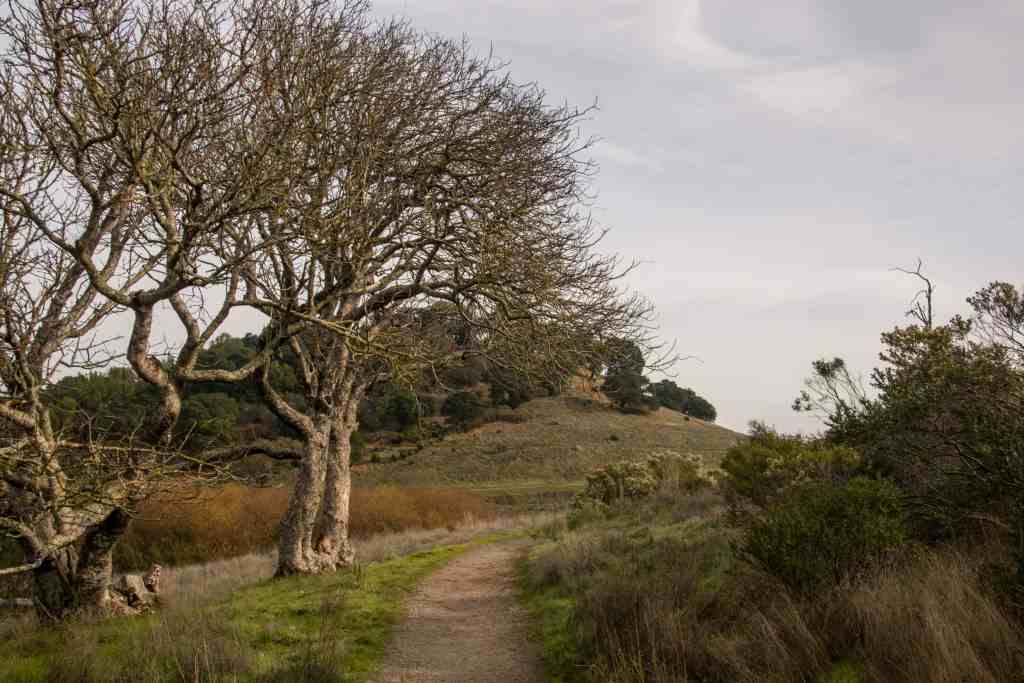 Sunrise Hike at China Camp - Marin | Hike Then Wine