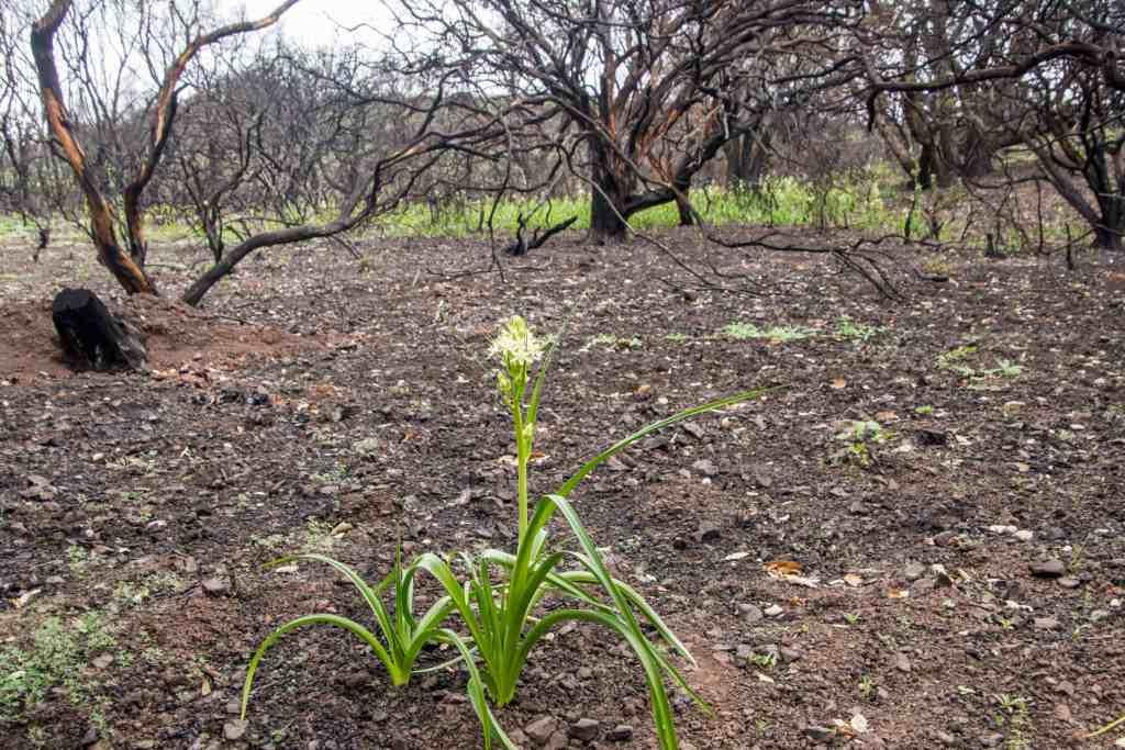 Sugarloaf Ridge State Park Healing and Hope - Sonoma | Hike Then Wine