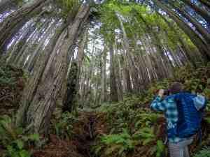 Where's the Pomo Canyon Waterfall? – Sonoma Coast