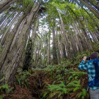 Where's the Pomo Canyon Waterfall? – Sonoma Coast