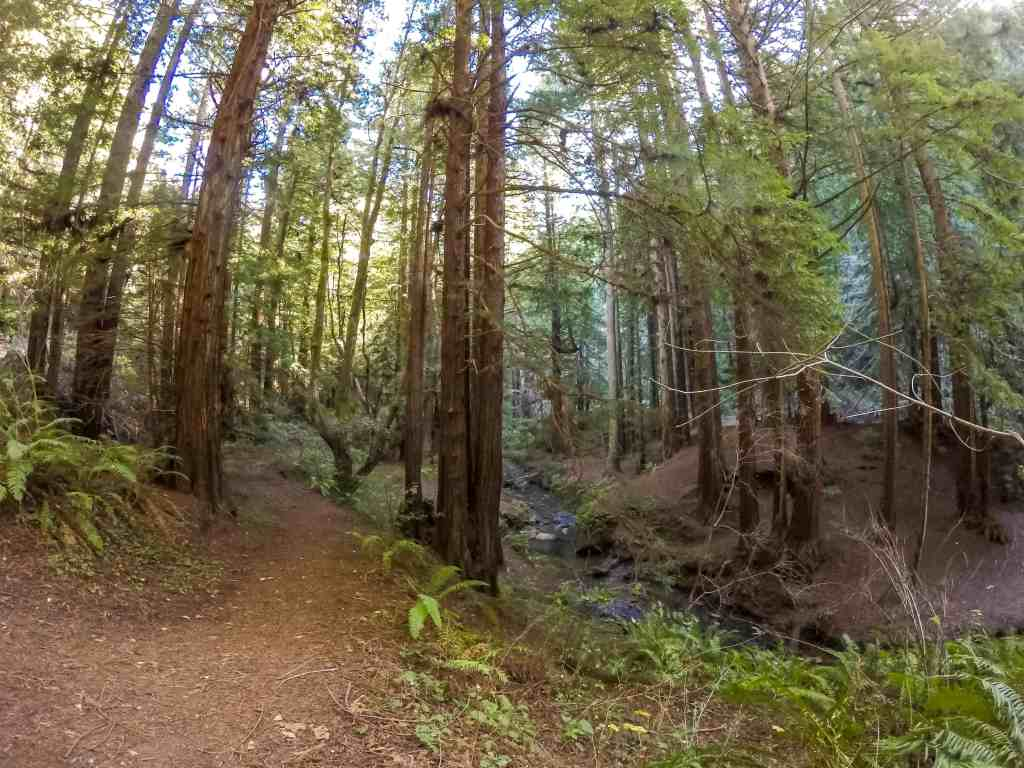 Purisma Creek Redwoods Preserve Adventure - South Bay | Hike Then Wine