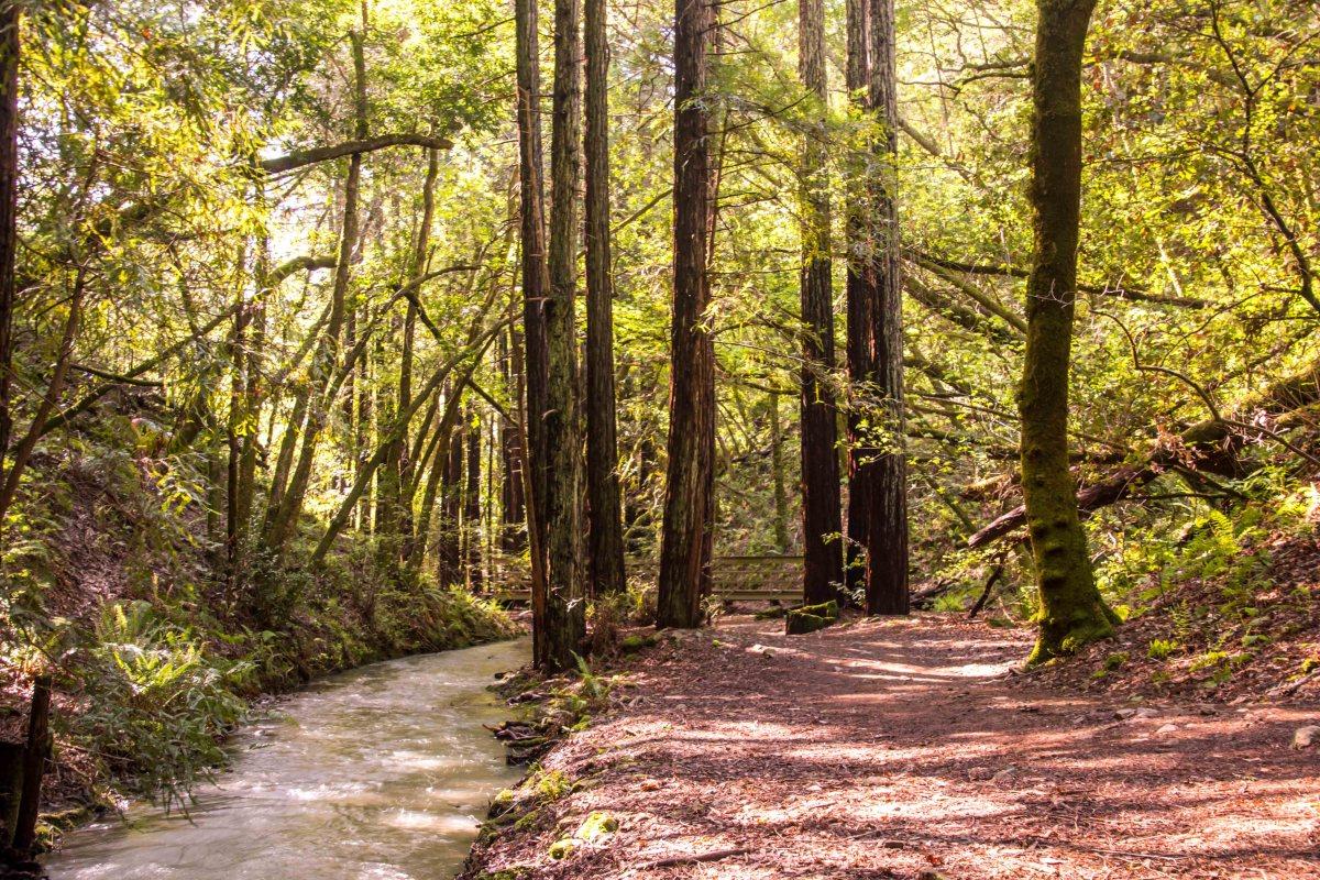 King Mountain Preserve to Dawn Falls - Marin