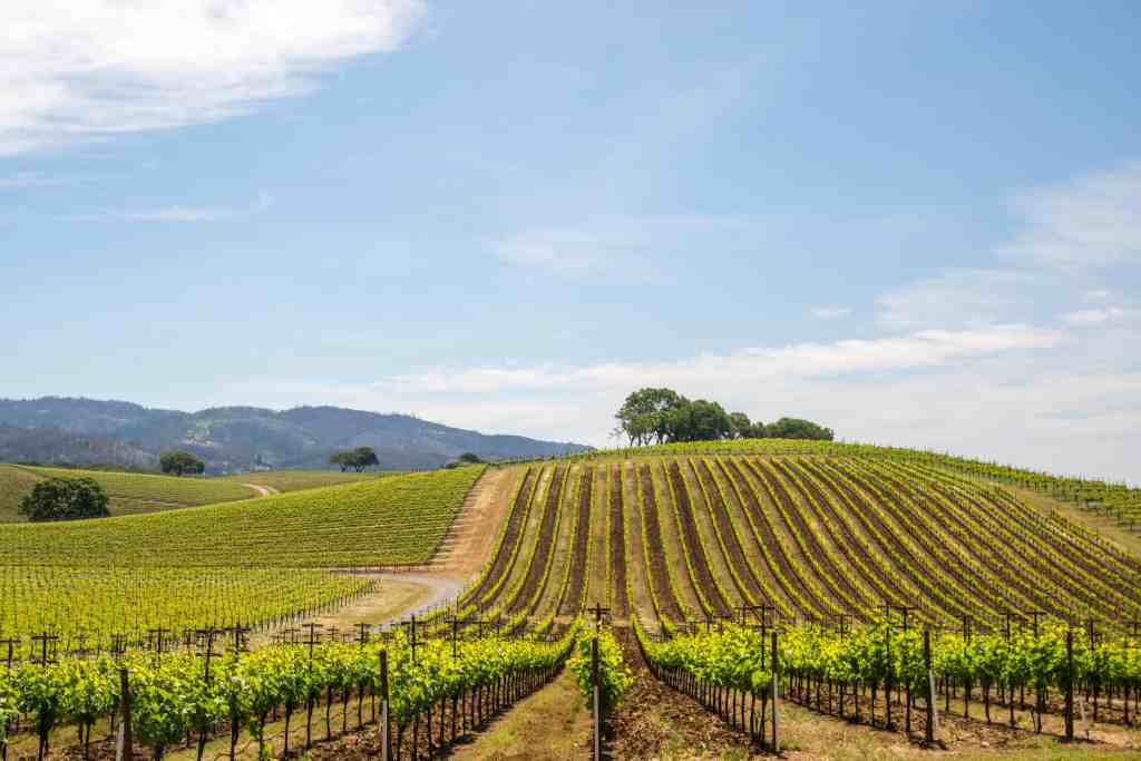 A Little Hike, A Little Wine - Kunde Family Winery | Hike Then Wine