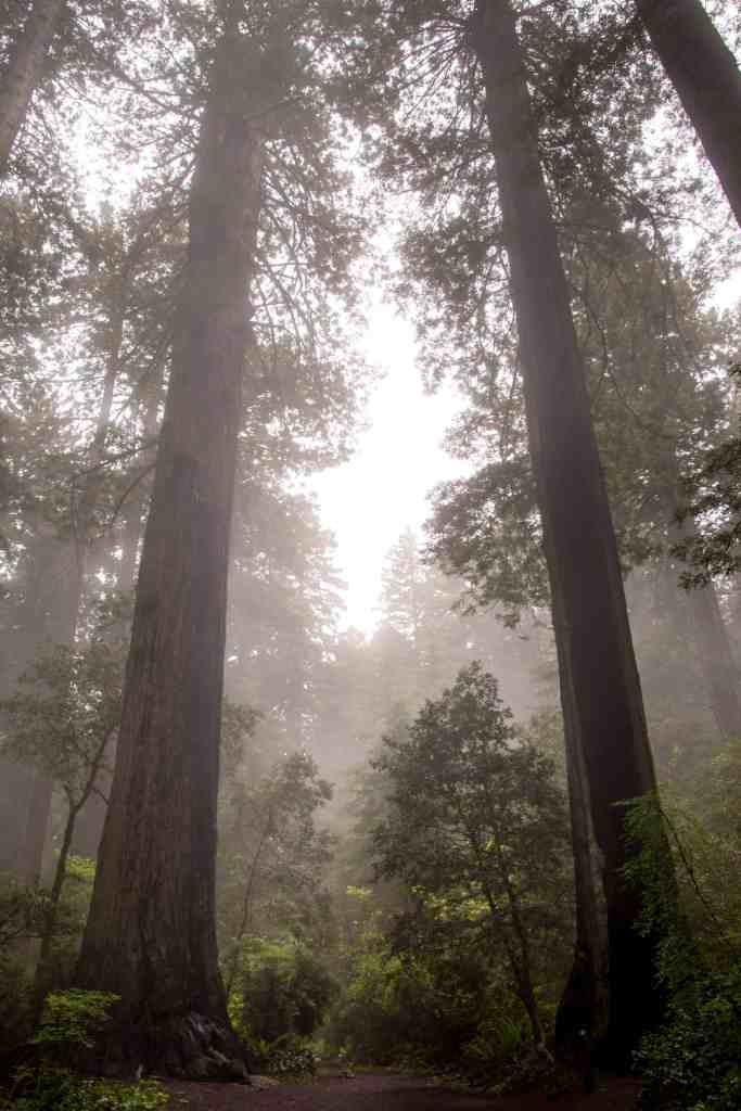 Redwood National Park - Humboldt County | Hike Then Wine