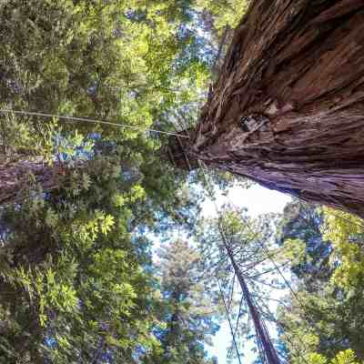 Ziplining Through the Redwoods! – Sonoma Canopy Tours