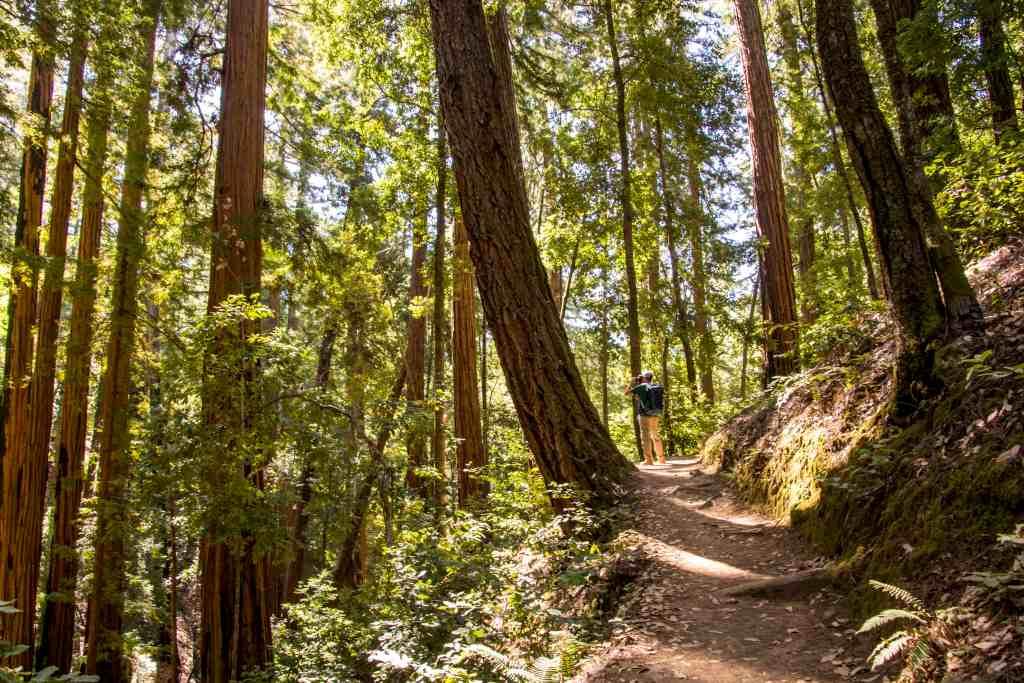 Sunset Trail in Big Basin Redwoods SP - Santa Cruz | Hike Then Wine