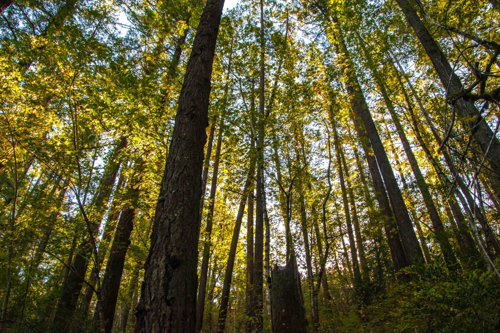 Searching for Fall in Bothe-Napa Valley State Park | Hike Then Wine