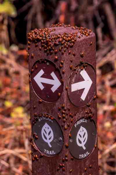 Finding Ladybugs at Redwood Regional Park - Oakland