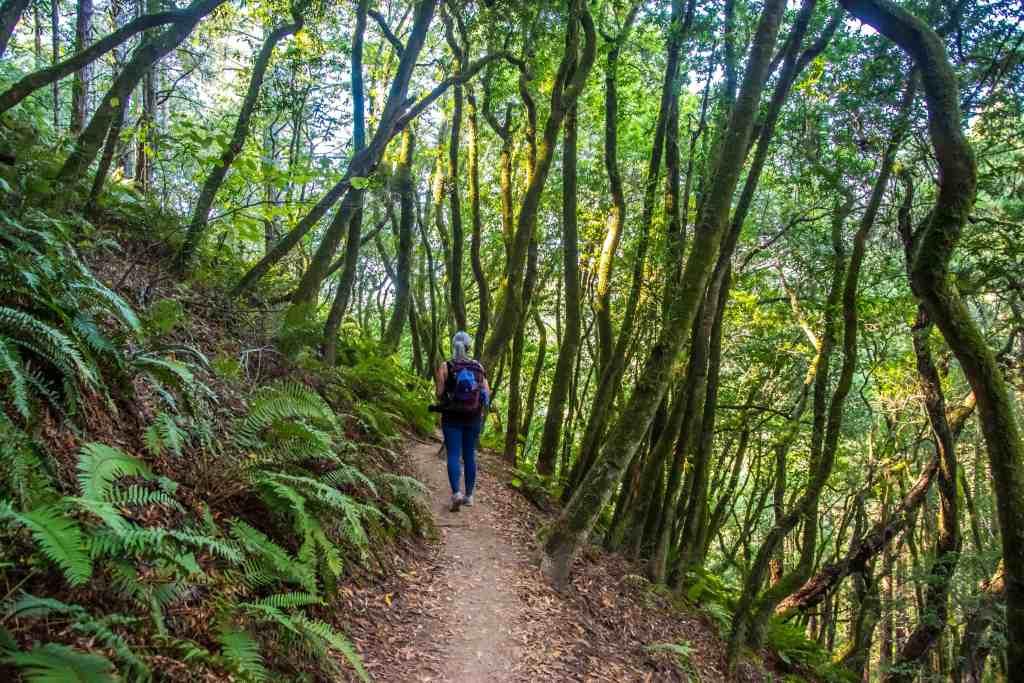 A Stroll Through Muir Woods - Marin County | Hike Then Wine