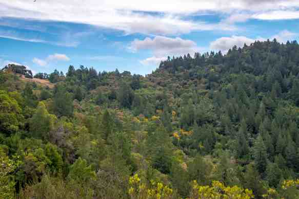 Fall Adventures in Austin Creek SRA - Sonoma County   Hike Then Wine