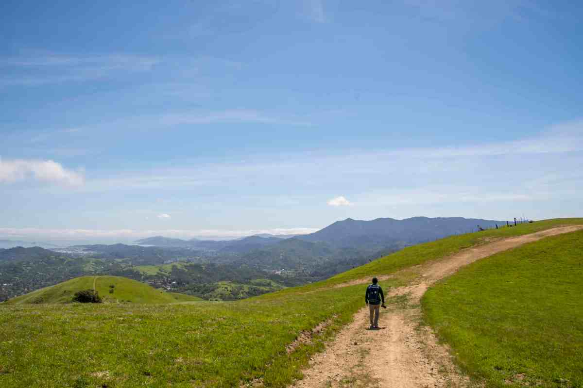 Wildflowers and Green Hills in Lucas Valley - Marin