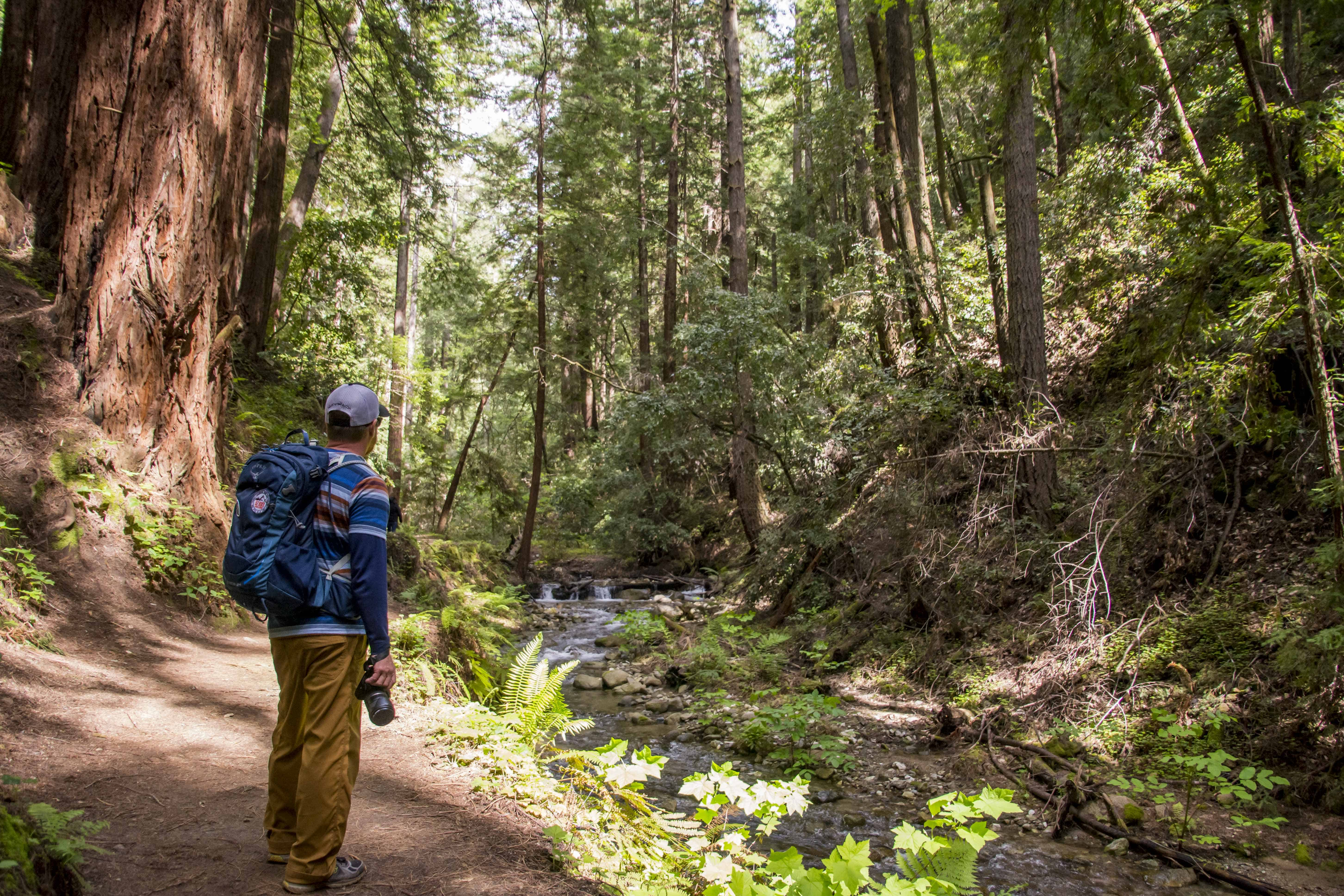 A Time to Recharge in Henry Cowell Redwoods SP - Fall Creek Unit   Hike Then Wine