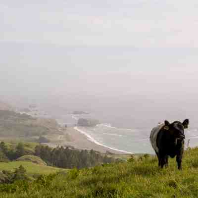 Sea to Sky & Raptor Ridge – Jenner Headlands Preserve